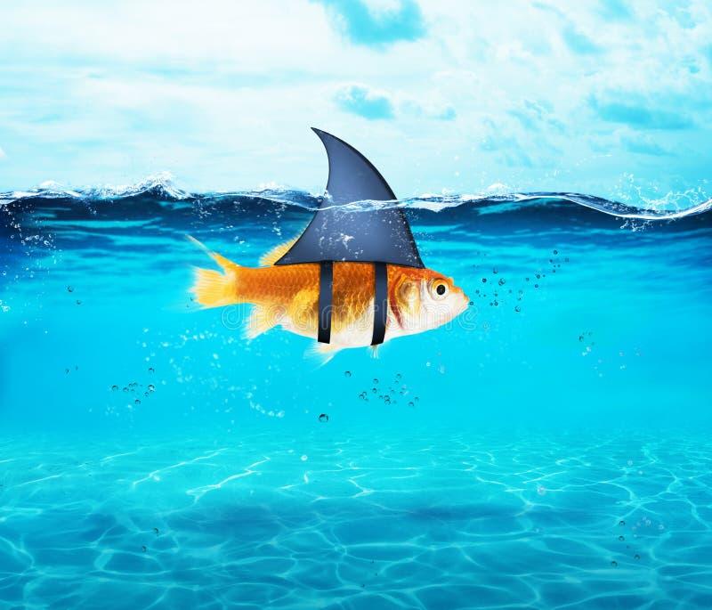 Pez de colores que actúa como tiburón para aterrorizar a los enemigos Concepto de competencia y de valor imagenes de archivo