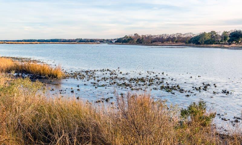 Pezzi di terra coltivati a ostrica a bassa marea fotografia stock libera da diritti