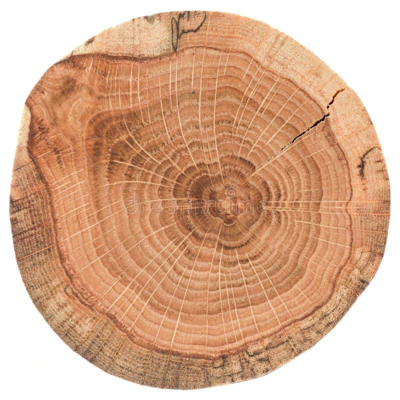 Pezzo di ceppo di legno circolare con le crepe e gli anelli di crescita Struttura della lastra della quercia isolata su fondo bia fotografia stock