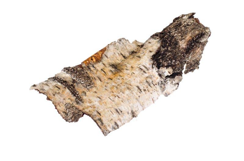 Pezzo di corteccia di betulla isolato su fondo bianco fotografia stock libera da diritti