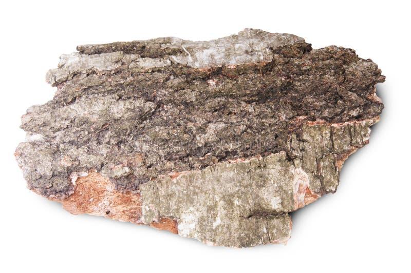 Pezzo di corteccia secca di vecchio albero di betulla fotografia stock libera da diritti