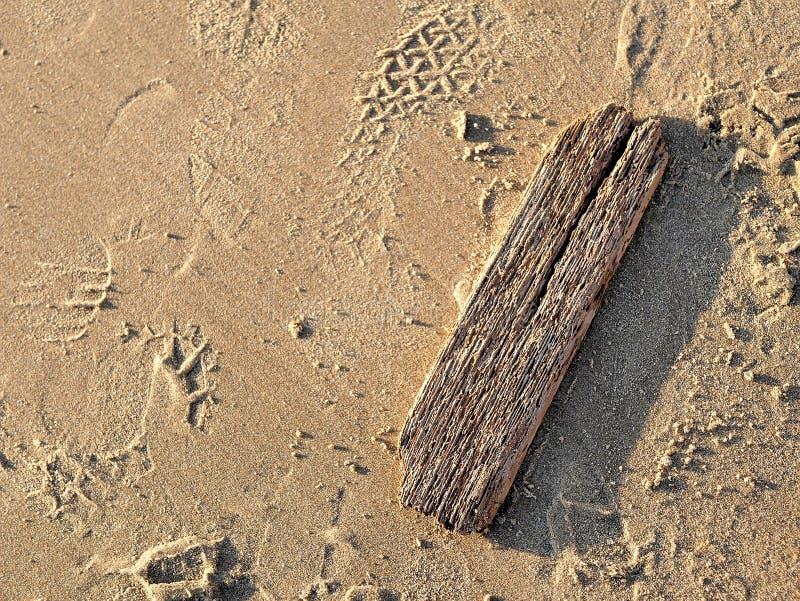 Pezzo di legname galleggiante sulla spiaggia con la sabbia bagnata marrone dorata che splende al sole accanto all'oceano fotografie stock