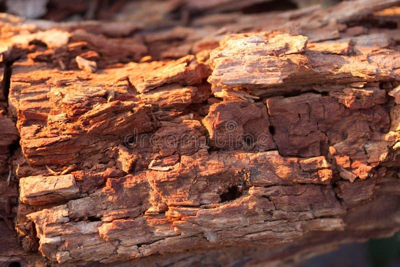 Pezzo di legno fotografia stock libera da diritti