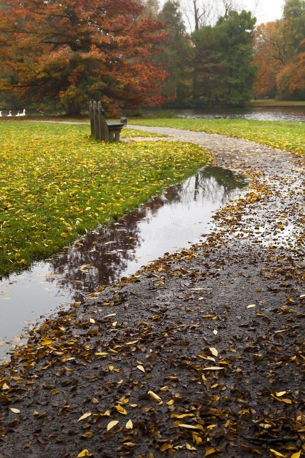 Pfütze auf Pfad im Herbst stockfotos