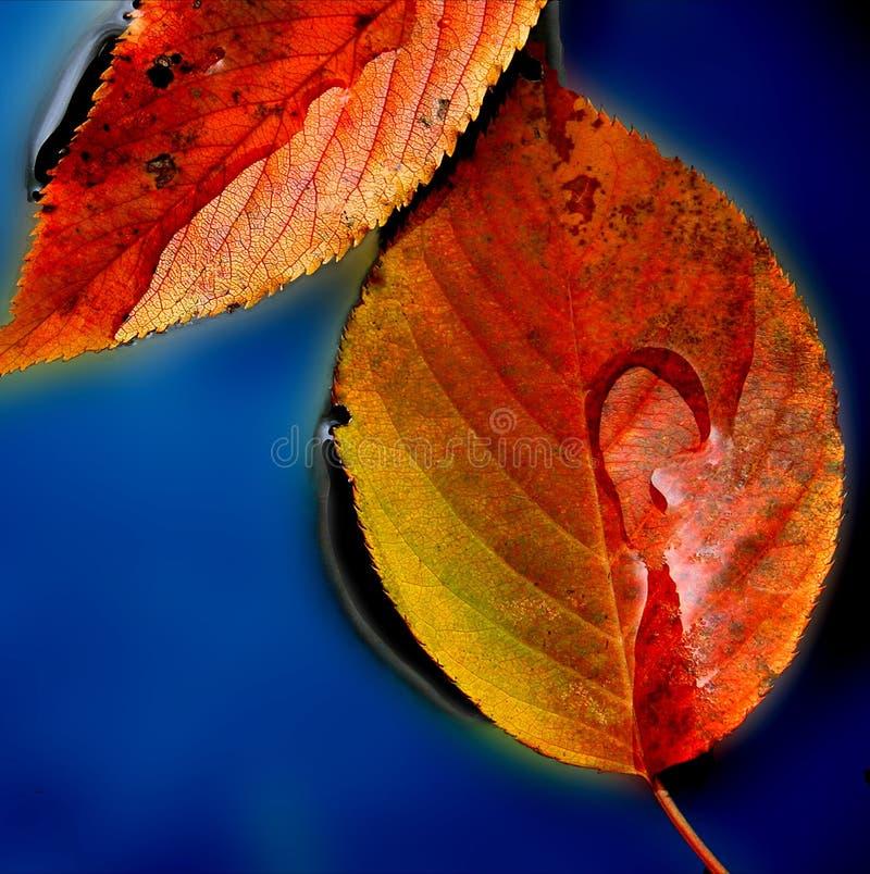 Pfütze der Blätter stockbilder