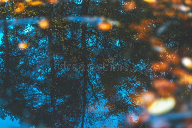 Pfütze mit Herbstlaub und Reflexion von Bäumen stockbilder