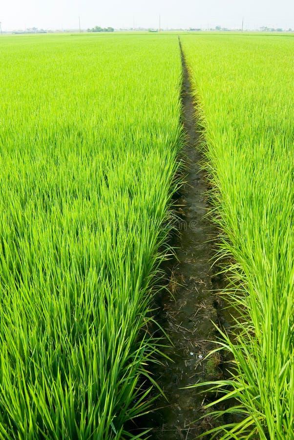 Pfad auf dem grünen Gebiet lizenzfreie stockfotos
