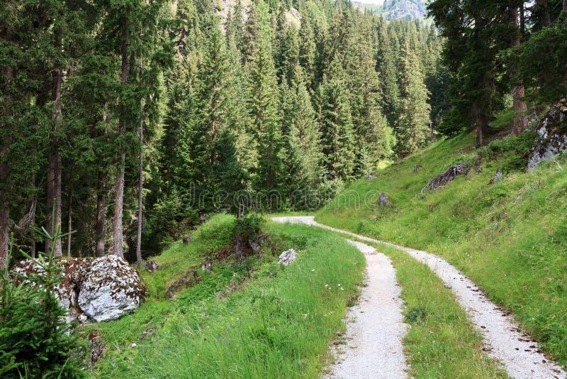 Download Pfad auf dem Holz stockfoto. Bild von alpen, jahreszeit - 27735278