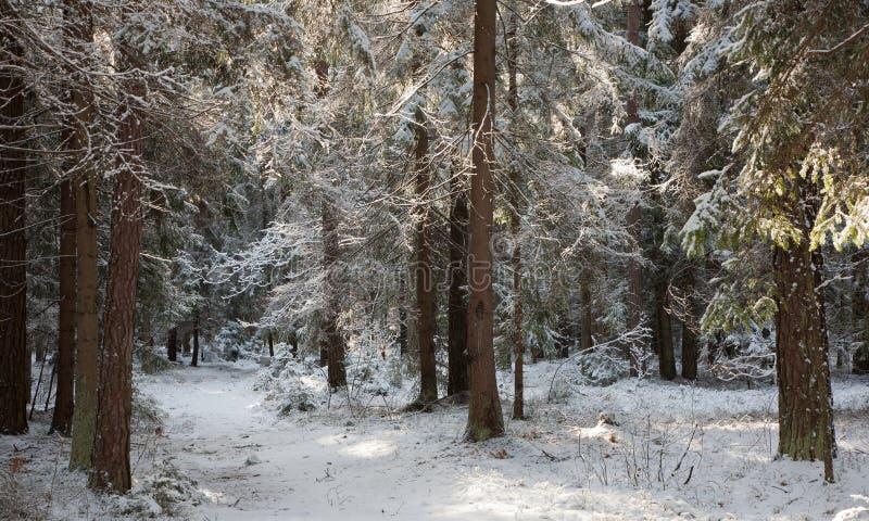 Pfad, der schneebedeckten Wald kreuzt stockbild