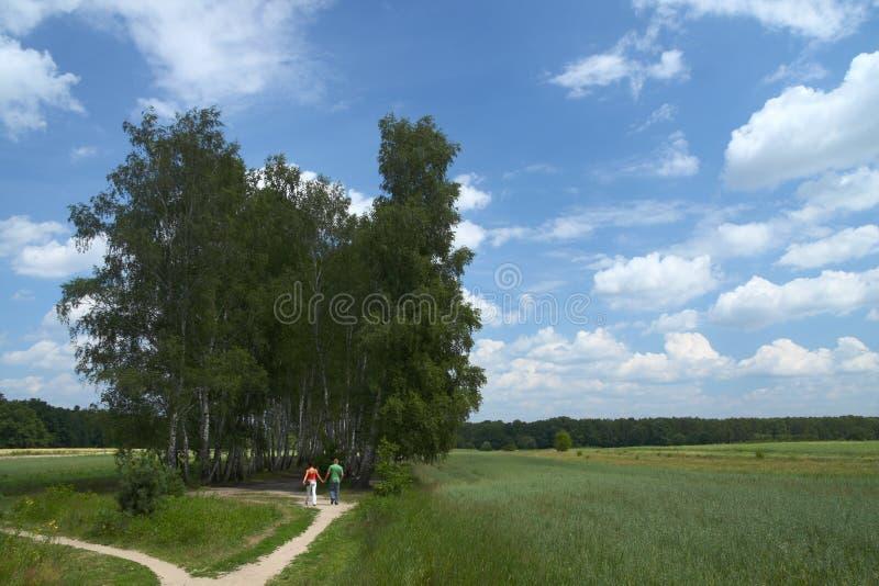Pfad in die Bäume lizenzfreie stockfotografie