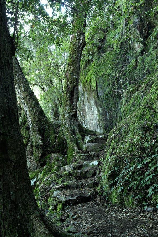 Pfad durch den Regenwald stockfotos