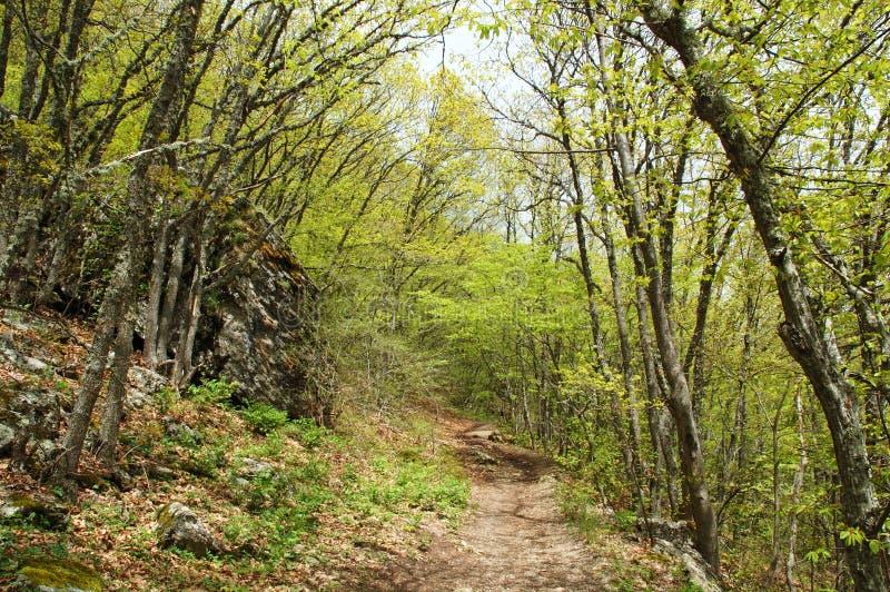 Pfad durch den Wald stockbilder