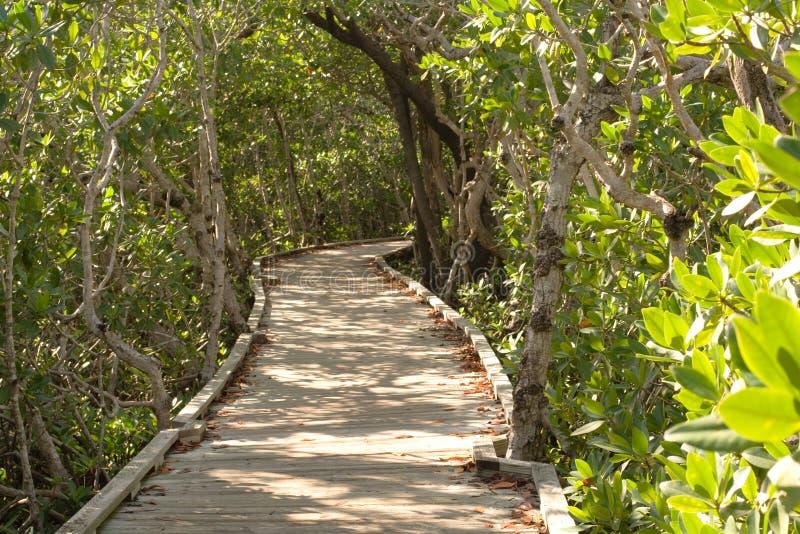 Pfad durch die Mangroven - horizontal stockbild