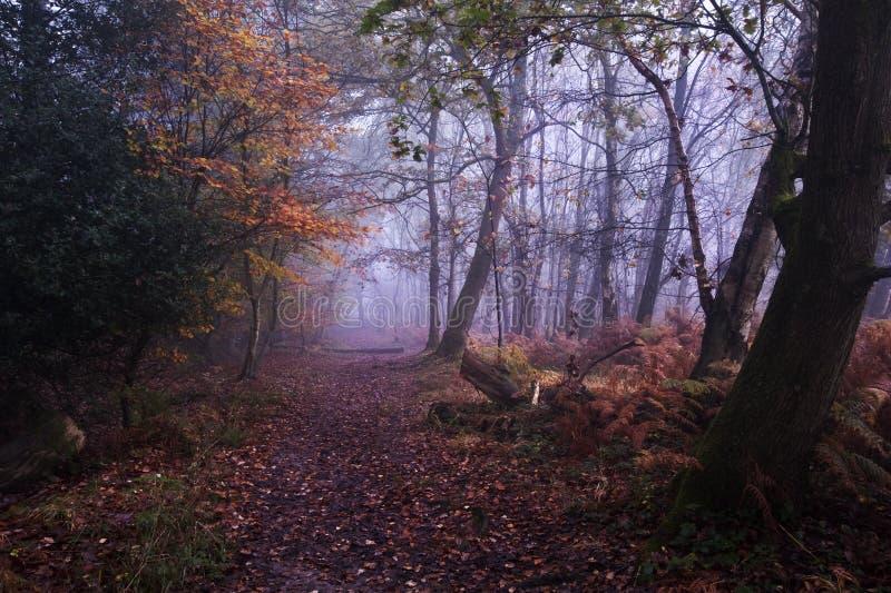 Pfad durch nebeligen nebelhaften Herbstwald lizenzfreie stockbilder