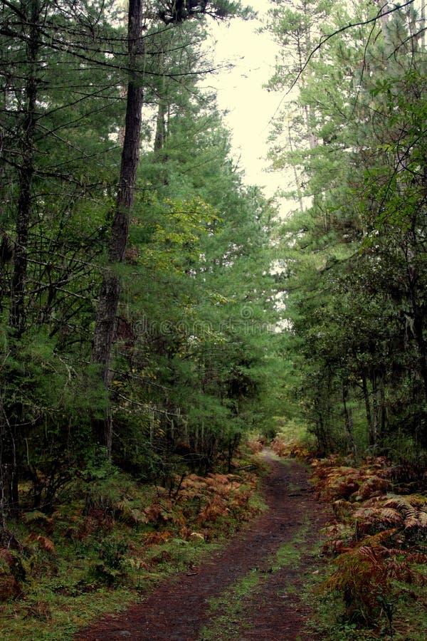 Pfad durch Regenwälder lizenzfreie stockfotografie