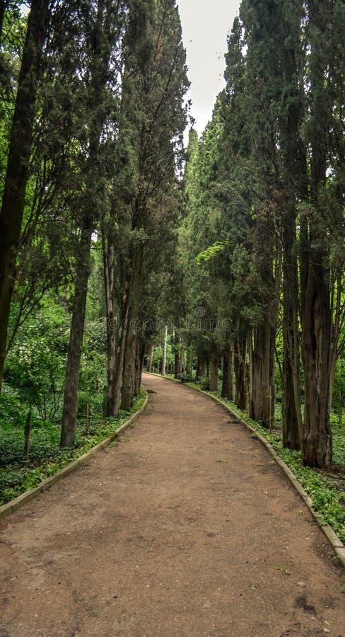 Pfad in einem botanischen Garten lizenzfreie stockfotografie