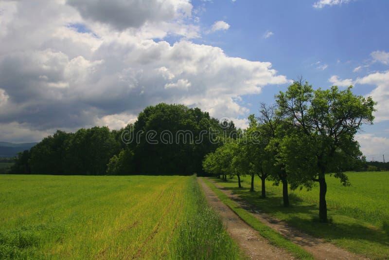 Pfad entlang Bäumen lizenzfreie stockfotografie
