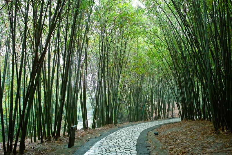 Pfad im Bambuswald lizenzfreies stockfoto