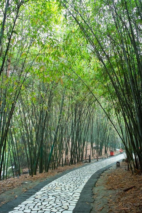 Pfad im Bambuswald stockfoto