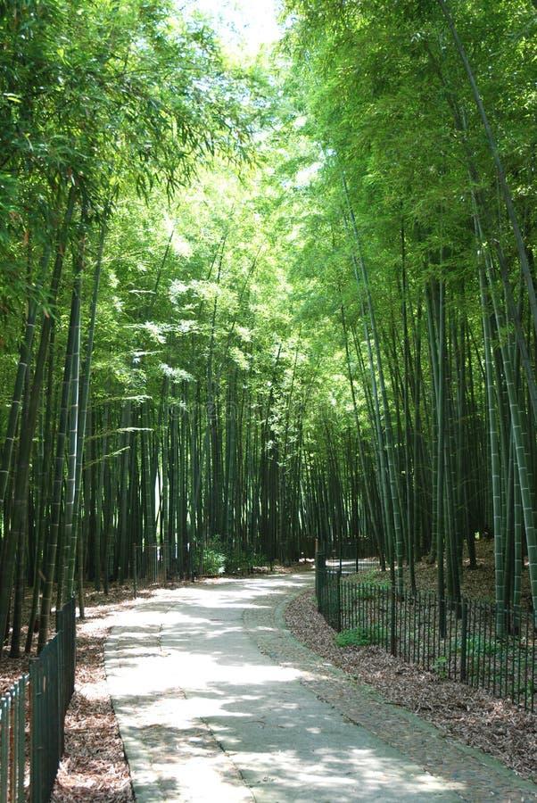 Pfad im Bambuswald lizenzfreie stockfotos