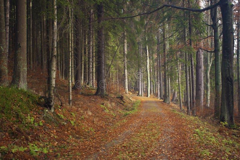 Pfad im Herbstwald lizenzfreie stockfotos