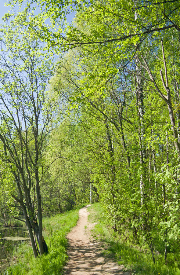 Pfad im Sommerwald stockfoto