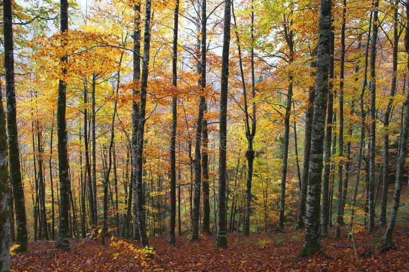 Pfad im Wald mit Herbstblättern stockbild