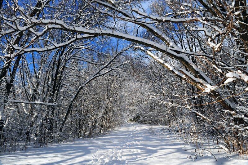 Pfad im Winterwald stockbild