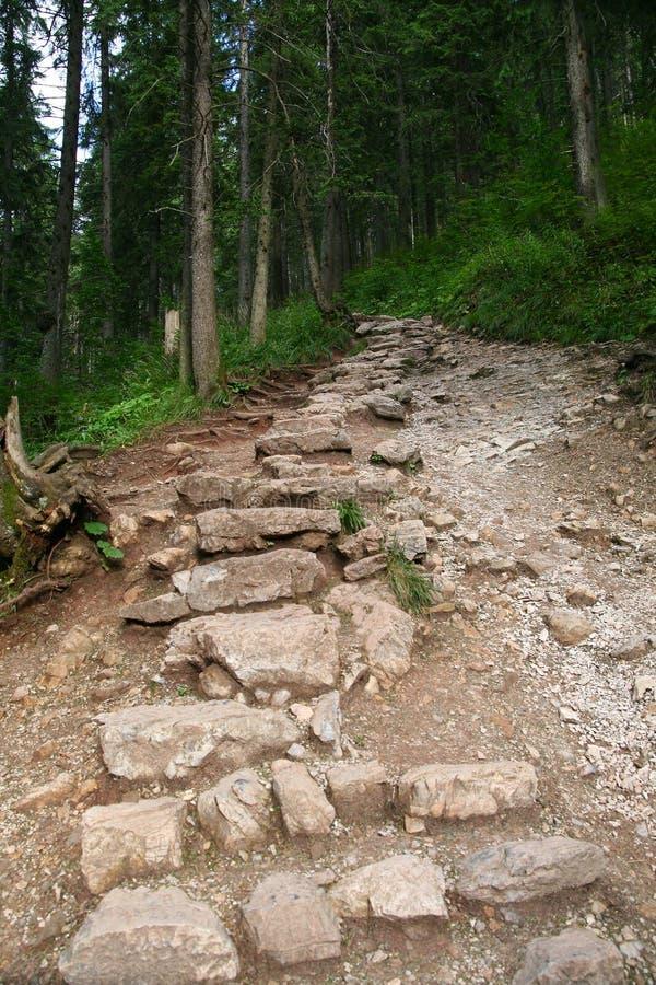 Pfad in Wald stockfotografie