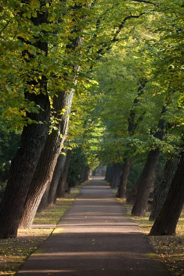 Pfad zwischen Gasse der schrägen Bäume lizenzfreie stockfotografie