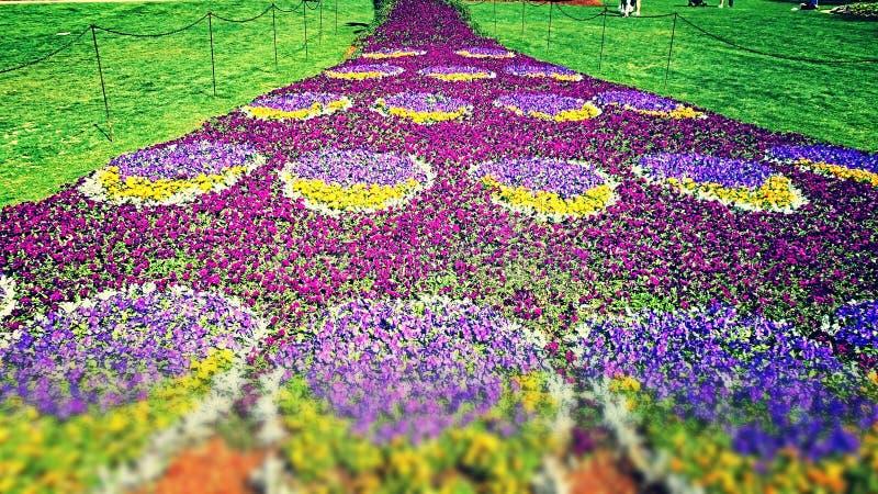 Pfau-Blumen-Endstück lizenzfreie stockfotos
