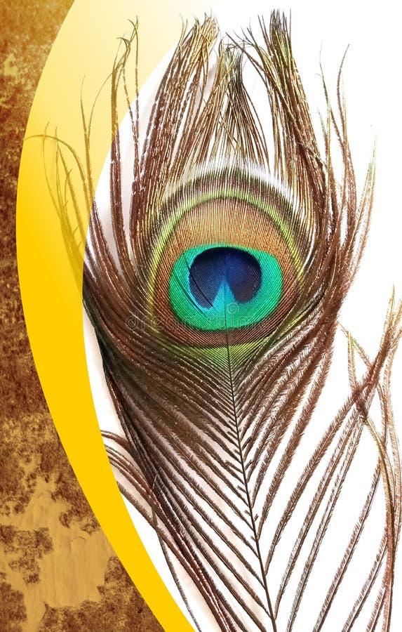 Pfau bringt mit abstrakter Vektor mehrfarbigem strukturiertem schattiertem Hintergrund hervor Auch im corel abgehobenen Betrag lizenzfreies stockbild