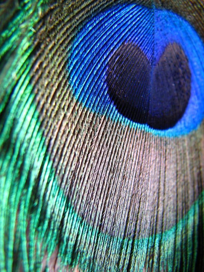 Pfau-Feder-Farben stockbild