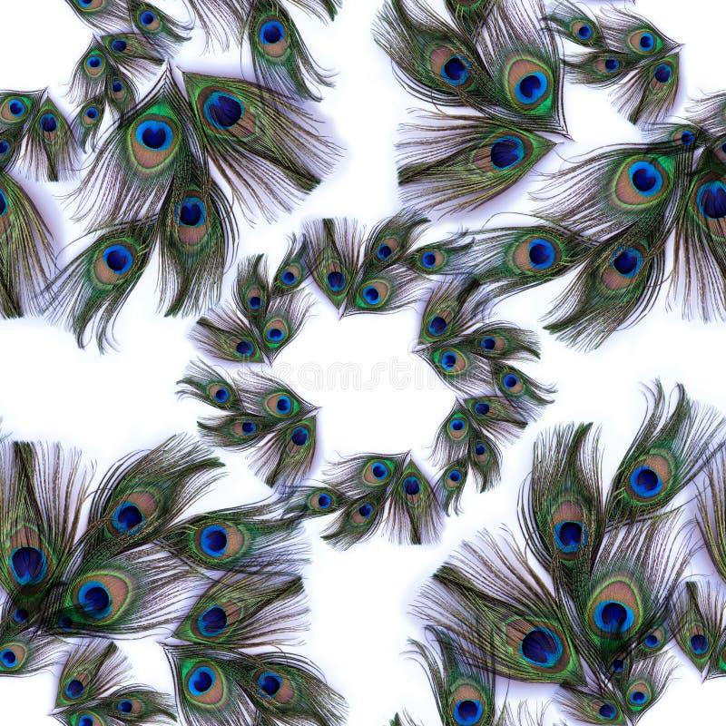 Pfaufedern auf weißem Hintergrund Nahtloser Hintergrund Eine Collage von Federn Benutzen Sie Druckerzeugnisse, Zeichen, Gegenstän lizenzfreie stockfotografie