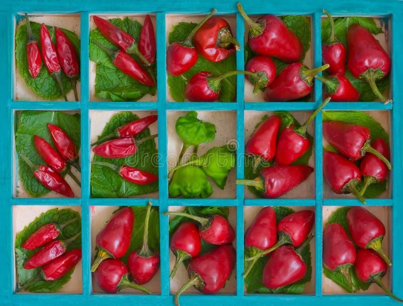 Pfeffer des roten Paprikas lizenzfreie stockbilder