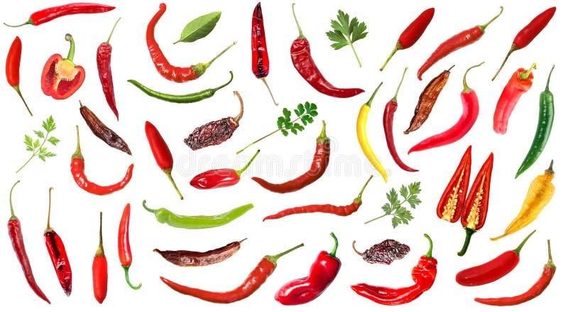 Pfeffer des scharfen Paprikas auf weißem Hintergrund stock abbildung