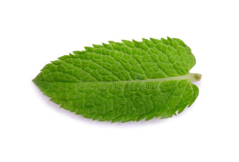 Pfefferminz, grüne Minze Medizinische Anlage Eine Nahaufnahme eines süßen und frischen Blattes der Minze Hellgrüne tadellose Blät stockbilder