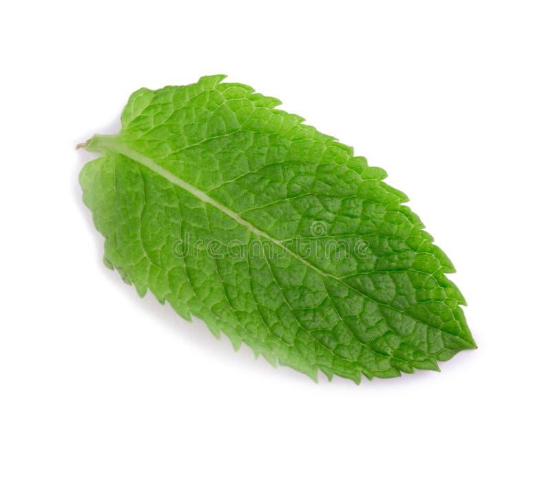 Pfefferminz, grüne Minze Medizinische Anlage Eine Nahaufnahme eines süßen und frischen Blattes der Minze Hellgrüne tadellose Blät lizenzfreie stockfotos