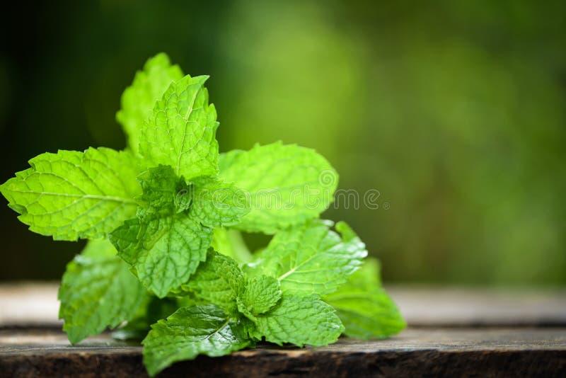 Pfefferminzblatt - frische tadellose Blätter auf einem hölzernen Naturgrünhintergrund lizenzfreie stockbilder