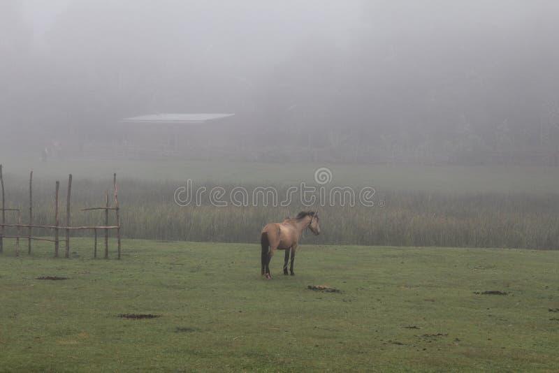 Pferd in Äthiopien lizenzfreie stockfotos
