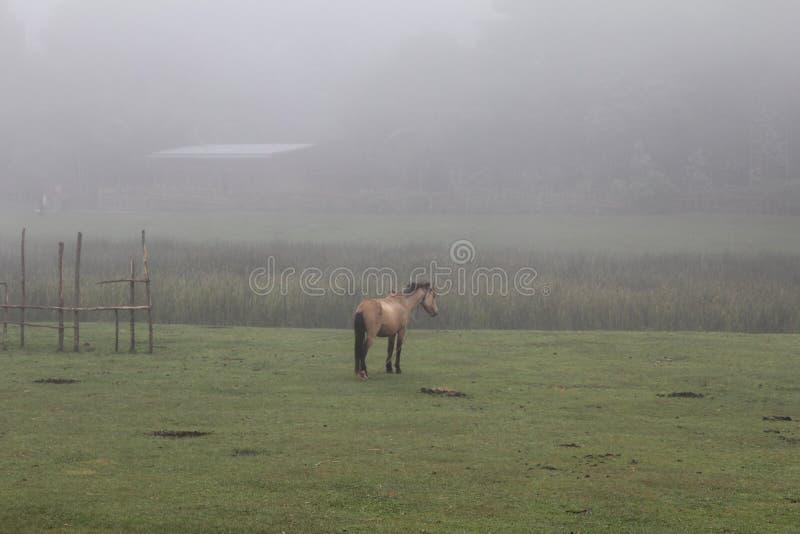 Pferd in Äthiopien stockbilder