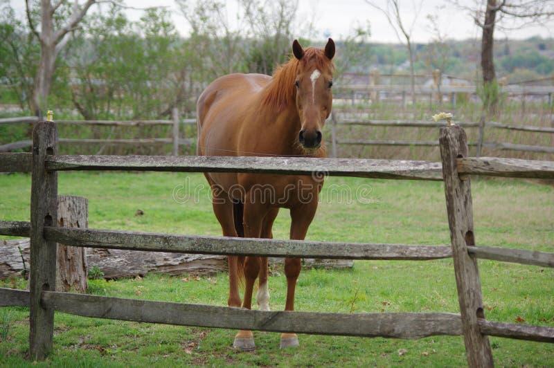 1 Pferd lizenzfreie stockbilder