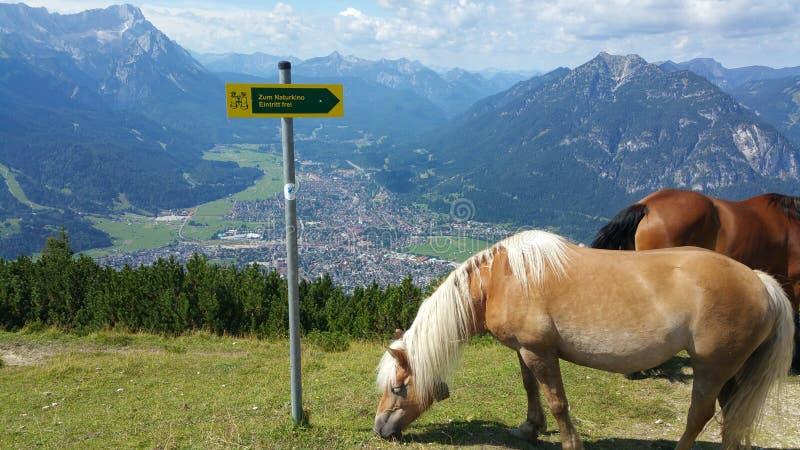 Pferd auf Berg stockbild