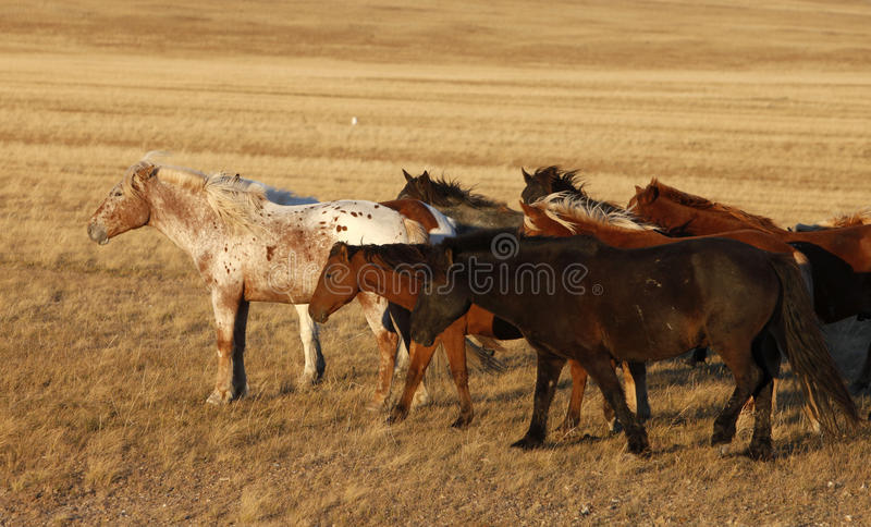 Download Pferd auf dem Grasland stockfoto. Bild von pferd, rasen - 27734318