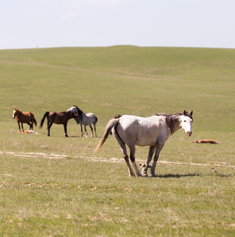 Pferd auf Natur lizenzfreies stockfoto