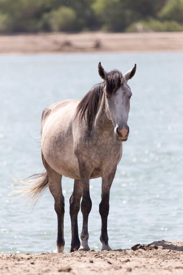Pferd auf Natur lizenzfreies stockbild