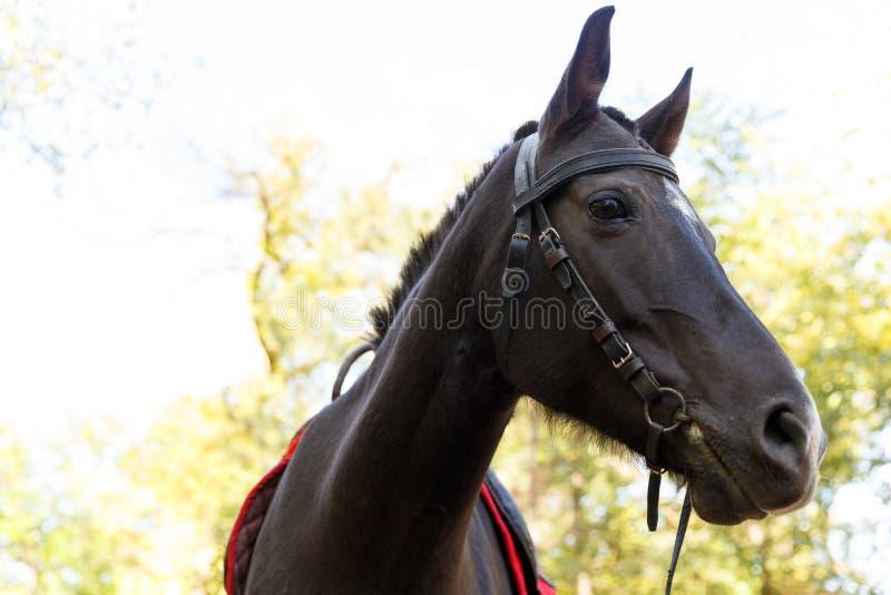 Pferd auf Natur Pferdeportrait, braunes Pferd lizenzfreies stockfoto