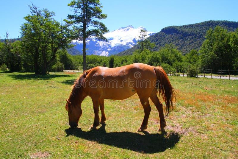 Pferd auf Patagonian Landschaft - Bariloche - Argentinien stockbild