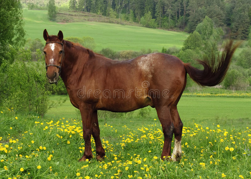 Pferd auf Weide lizenzfreies stockfoto