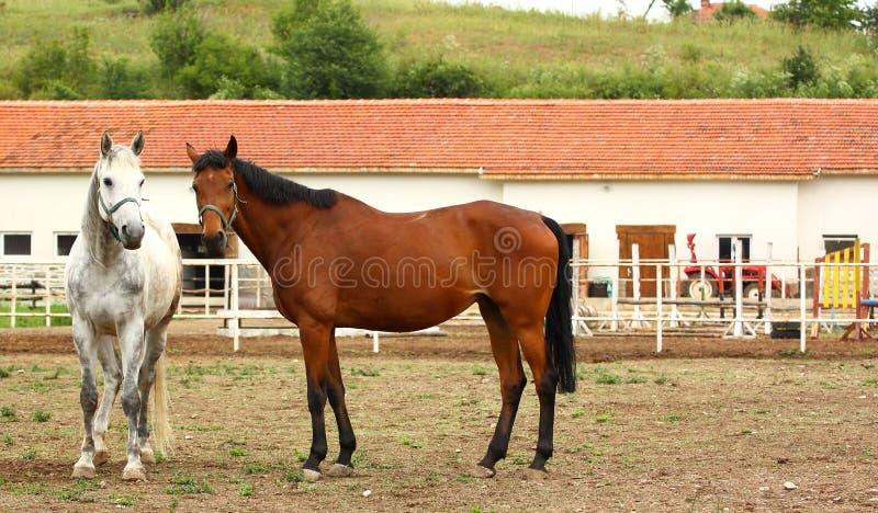 Pferd-Bauernhof mit Pferden lizenzfreies stockfoto